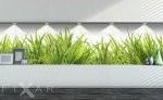Fototapeten, grass